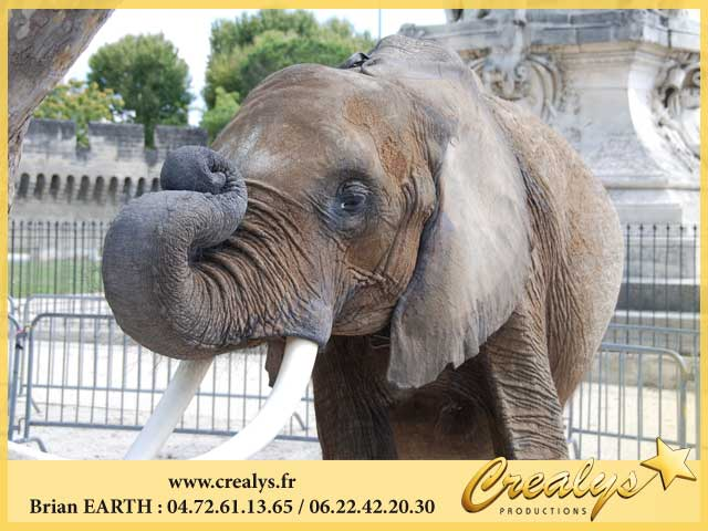 Photo elephants96